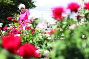 Rose fest