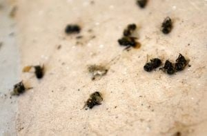 Mosquitoes, bees are bugging Gilbert residents