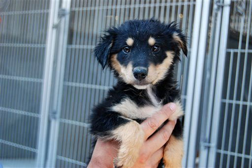 Pets Shelter Returns