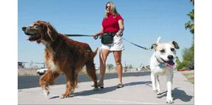 Pet sitters' days are full of wet noses, wags and walks in the park