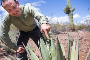 Foragers teach the curious to reap Sonoran bounty