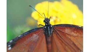 Two locations offer great looks butterflies
