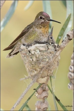 Hummingbird Habitat