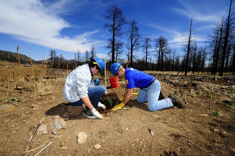 Shultz Fire Reforestation