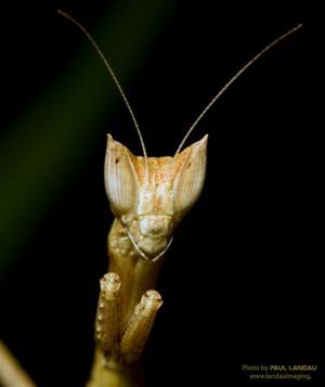 arboretum mantis