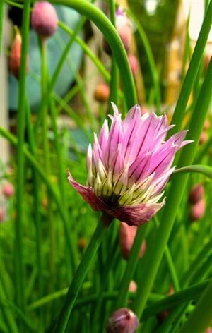 Gardening-Gourmet Herbs