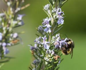 Gardening-Bee Sanctuaries