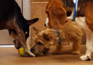 PetsMart opens a dog, cat hotel with all the amenities