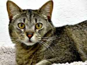 $2,500 reward offered in case of Mesa mutilated cats