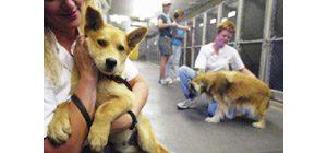Nonprofit helping county help animals