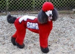 Pets-Dog Do Overs