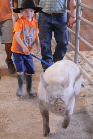 FFA Pig Weigh-in