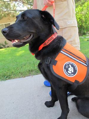 Vidalia the certified hearing dog