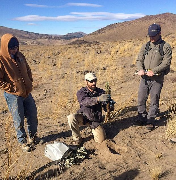 NDOW sagebrush seeding