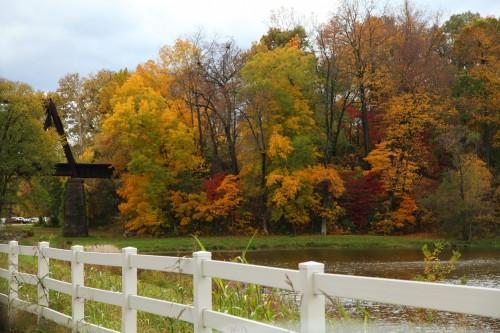 009 Fall trees.jpg