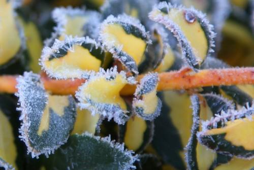 004 Frost.jpg