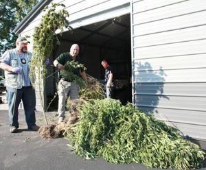 Officers Seize Massive Pot Plants Near Gerald