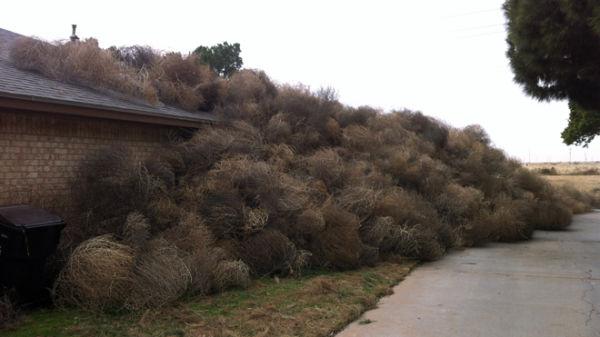 Odd Tumbleweeds