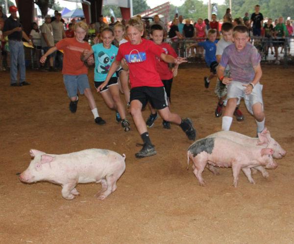 030 Pig Chase 2013.jpg