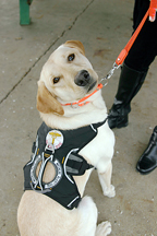 Diabetic Alert Dogs Save Lives