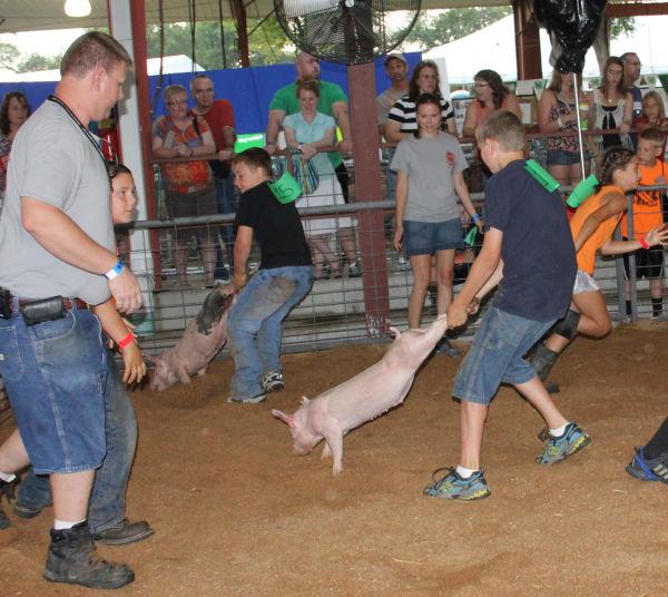 028 Pig Chase 2013.jpg