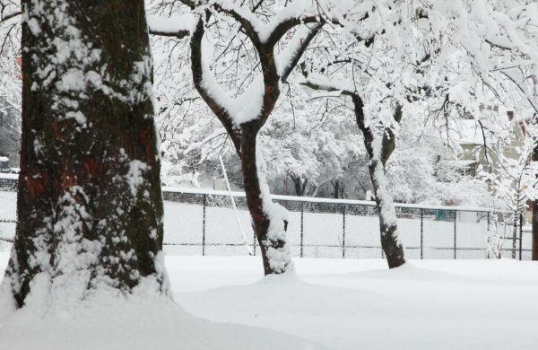 032 Snow December 14 2013.jpg