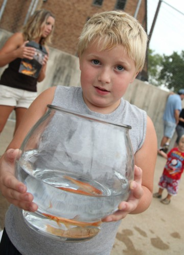047 Goldfish.jpg