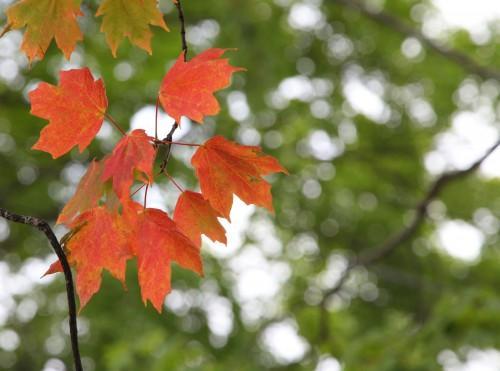 019 Fall trees.jpg
