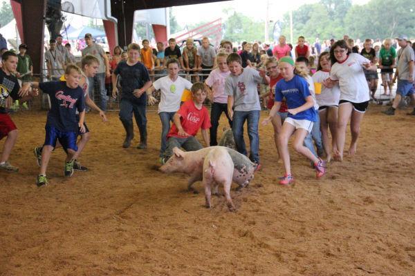 035 Pig Chase 2013.jpg