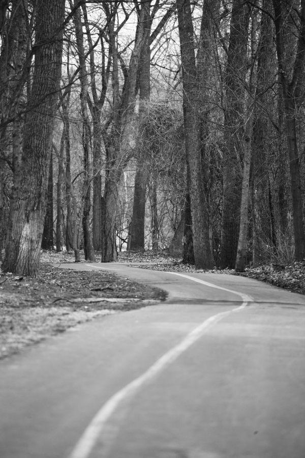 003 February Walk on Trail.jpg