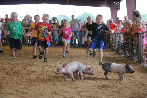 012 Pig Chase 2013.jpg