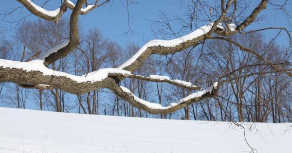 014 Snow January 6 2014.jpg
