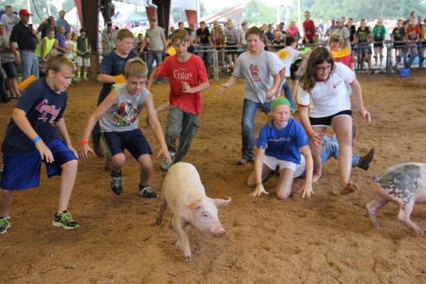037 Pig Chase 2013.jpg