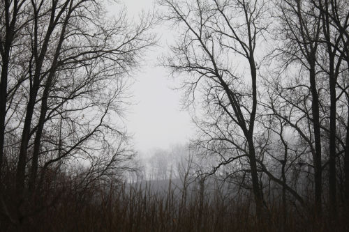 001 winter trail.jpg