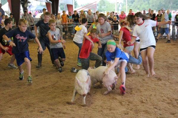 036 Pig Chase 2013.jpg