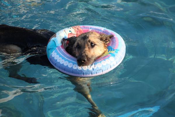 009 Doggie Dip 2013.jpg