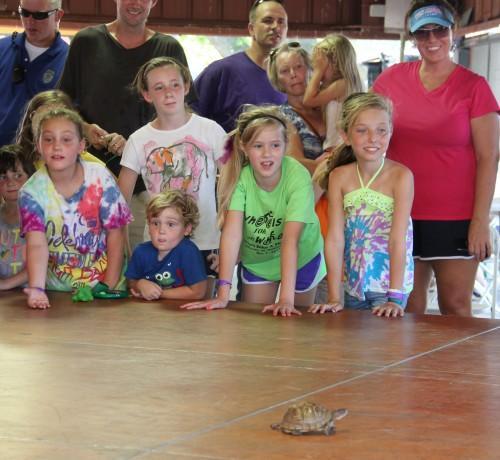 011 Turtle.jpg