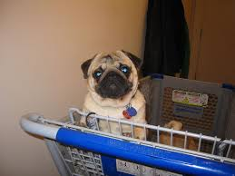 Dog in Shopping Cart