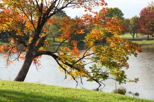 023 Fall trees.jpg
