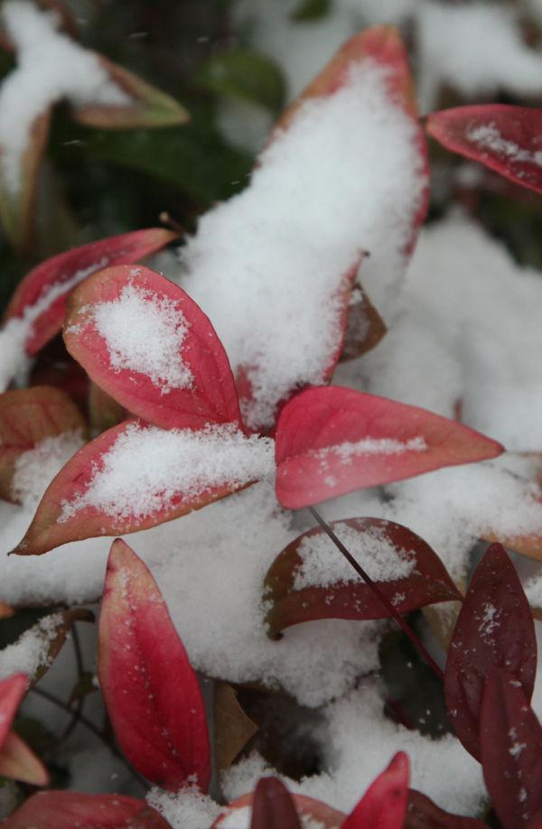 018 Snow.jpg