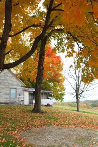 031 Fall trees.jpg