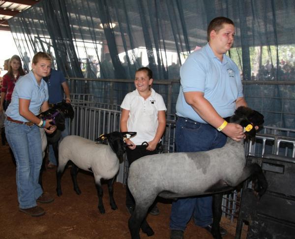 028 Fair Livestock.jpg