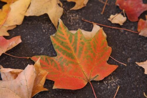 015 Fall trees.jpg