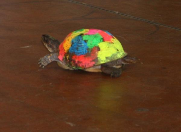 025 Fair Turtle Race.jpg