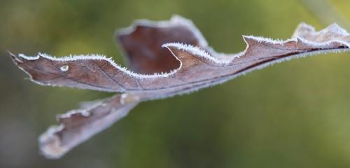 014 Frost.jpg