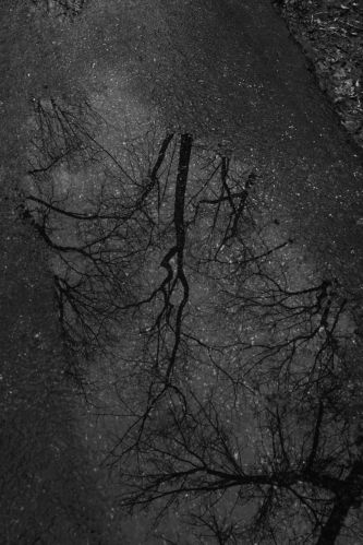 026 winter trail.jpg