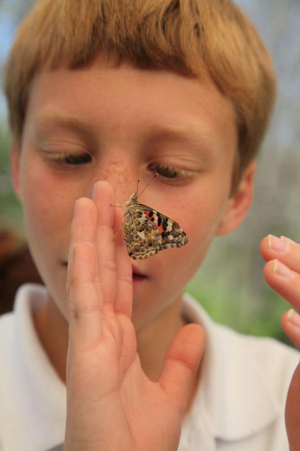 008 oll butterflies.jpg