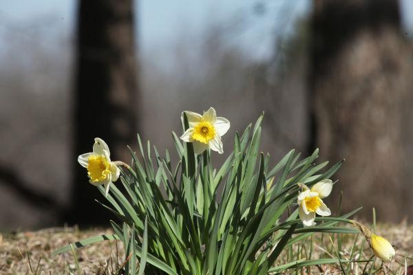 046 SNR Easter.jpg