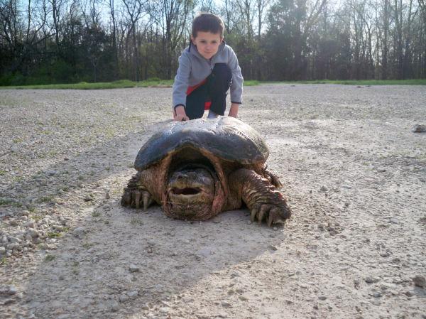Briggs Turtle 8.JPG