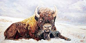 """Buffalo"" by Ron Emig"